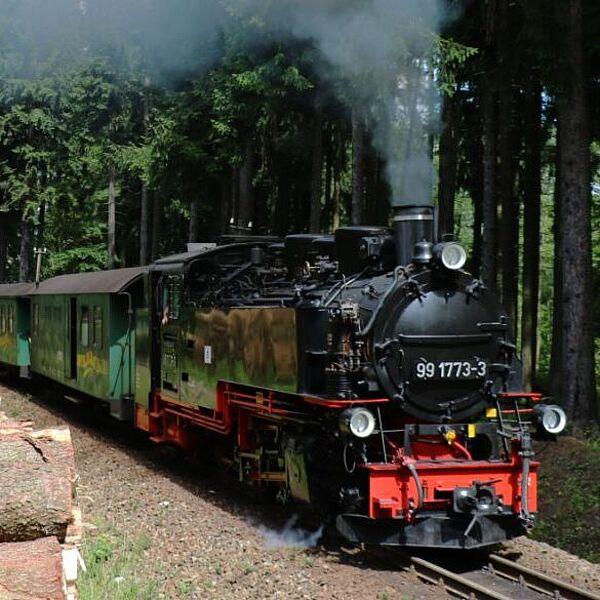 Walderlebnistag auf der Fichtelbergbahn