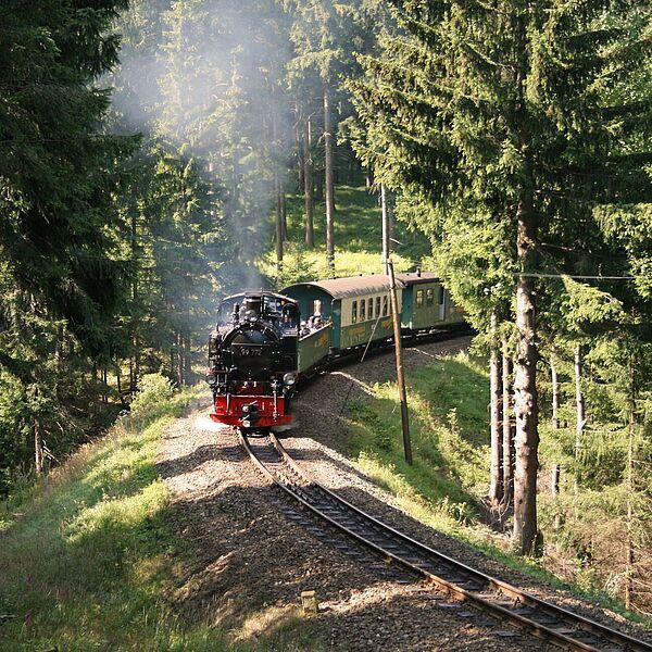 Walderlebnistag mit der Bimmelbahn