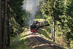 Dampfzug im Wald